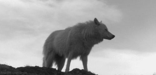 5-loup